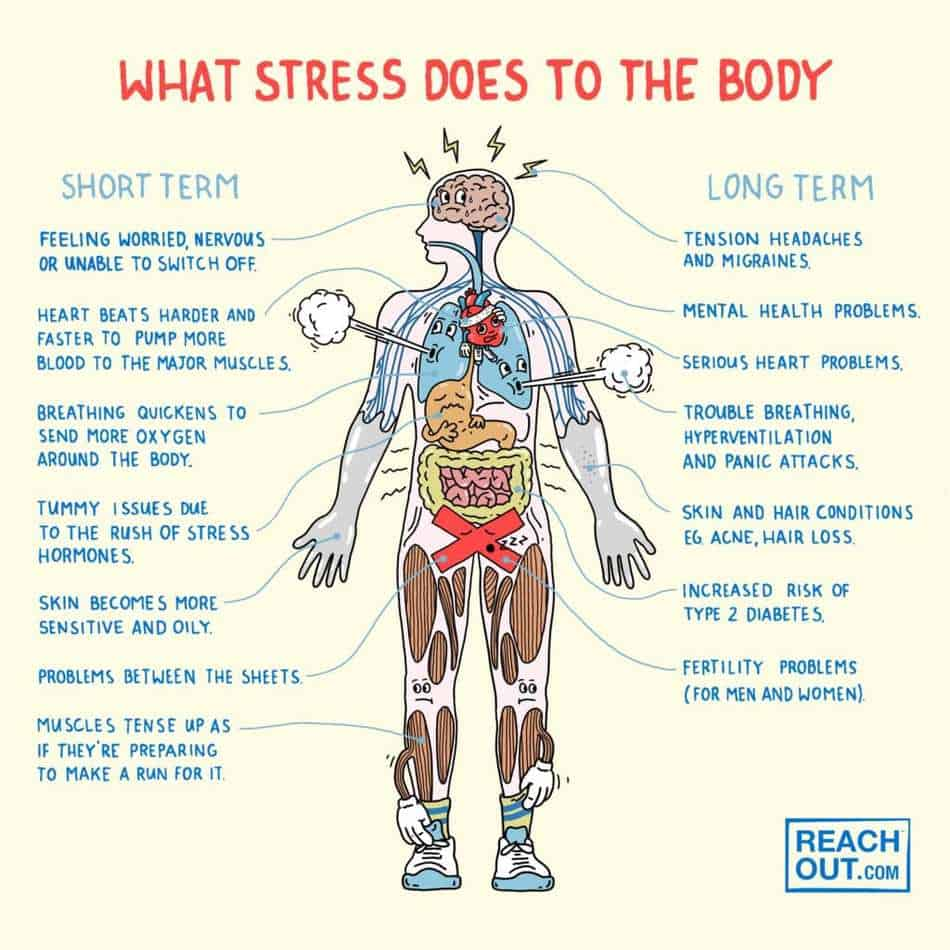 Stress and how it effects our body
