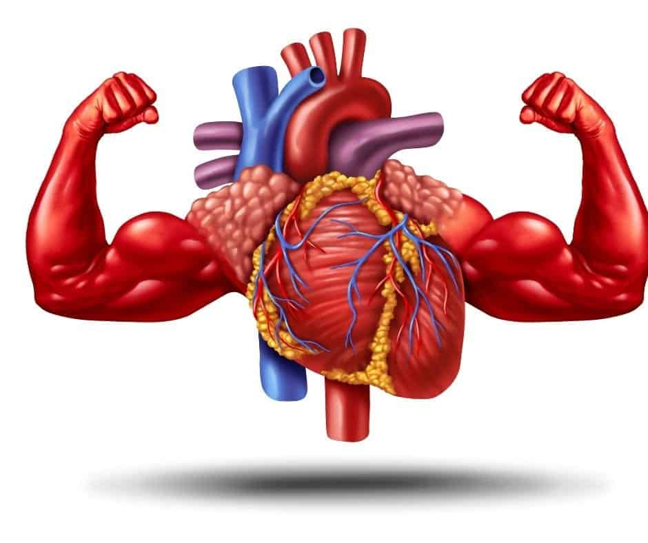 Improve your cardiovascular health by reducing alcohol