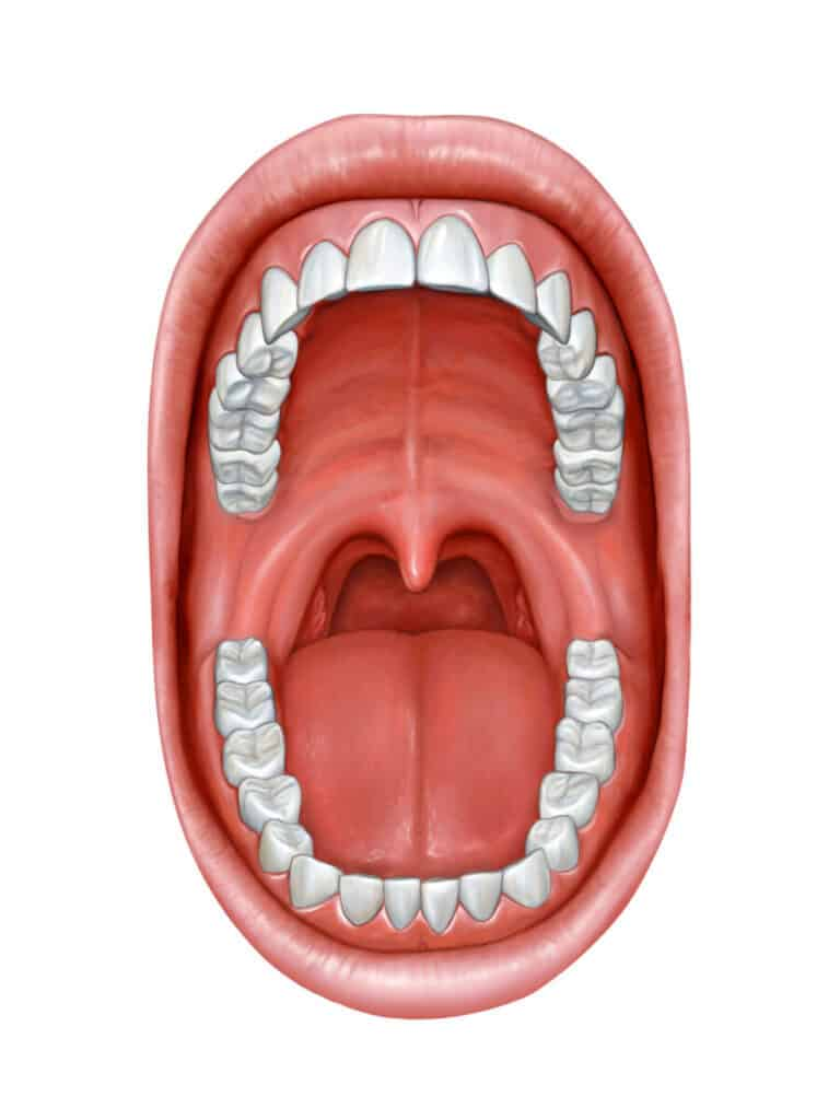 The function of the uvula, that dangly thing at the back of your throat.