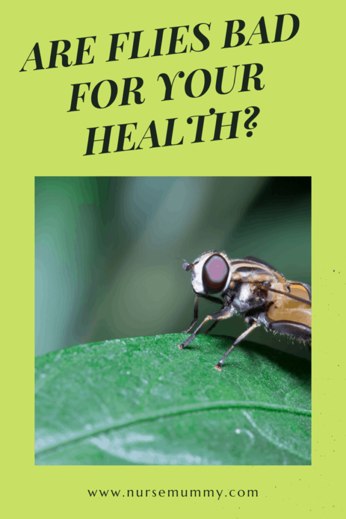 Flies can be a real pest in and out of the house. Having flies in your home environment can be hazardous to your health and getting rid of them is important. #howtogetridofflies #Flyrepellant #getridofflies #health #wound
